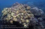 Indo_Bali_121_Jemeluk-3d_Soft-Coral_20160810_P8100393.jpg