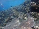 Indo_Bali_126_Jemeluk-3d_CoralStompers2_20160810_P8100400.jpg