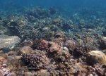 Indo_Bali_133_Jemeluk-3e_Coral_20160810_P8100389.jpg