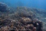 Indo_Bali_134_Jemeluk-3e_Coral_20160810_P8100390.jpg