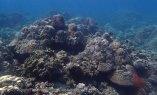 Indo_Bali_147_Jemeluk-3f_Coral_20160810_P8100368.jpg
