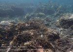 Indo_Bali_152_Jemeluk-3f_Coral_20160810_P8100357.jpg