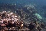 Indo_Bali_315_East-Lipa-7c_Coral_20160810_P8100316.jpg