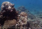 Indo_Bali_323_East-Lipa-7d_Coral_20160810_P8100306.jpg
