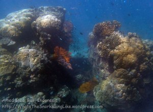 Indo_Bali_327_East-Lipa-7e_Split-Acropora-Coral_20160810_P8100301_.jpg