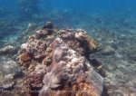 Indo_Bali_330_East-Lipa-7f_Coral_20160810_P8100297.jpg