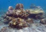 Indo_Bali_331_East-Lipa-7f_Coral_20160810_P8100298.jpg