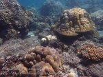 Indo_Bali_333_East-Lipa-7f_Coral_20160810_P8100299.jpg