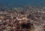 Indo_Bali_336_East-Lipa-7f_Coral_20160810_P8100295.jpg