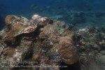 Indo_Bali_358_Lean-Beach-8b_Coral_20160810_P8100282.jpg