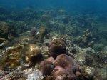 Indo_Bali_362_Lean-Beach-8c_Coral_20160810_P8100281.jpg