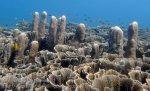 Indo_Bali_409_Selang-9b_Coral_20160809_P8090213.jpg