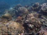 Indo_Bali_418_Selang-9b_Coral_20160809_P8090206.jpg