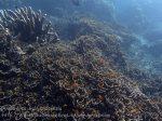 Indo_Bali_419_Selang-9b_Coral_20160809_P8090205.jpg