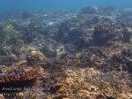 Indo_Bali_420_Selang-9b_Coral_20160809_P8090204.jpg