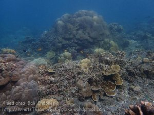 Indo_Bali_424_Selang-9c_Coral_20160809_P8090201.jpg