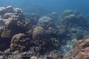 Indo_Bali_432_Selang-9c_Coral_20160809_P8090189.jpg