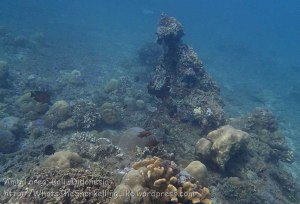 Indo_Bali_434_Selang-9c_Coral_20160809_P8090196.jpg