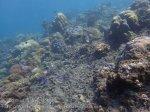 Indo_Bali_436_Selang-9c_Coral-Demoiselles_20160809_P8090193.jpg
