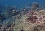 Indo_Bali_440_Selang-9de_Coral_20160809_P8090188.jpg