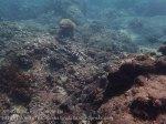 Indo_Bali_456_Banyuning-S2H-10a_Coral_20160810_P8100264.jpg