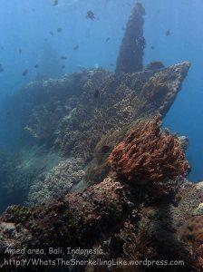 Indo_Bali_480_Banyuning-SE-11a_Shipwreck_20160810_P8100239.jpg