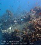 Indo_Bali_484_Banyuning-SE-11a_Shipwreck-Anthias_20160810_P8100236.jpg