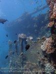 Indo_Bali_485_Banyuning-SE-11a_Shipwreck_20160810_P8100237.jpg