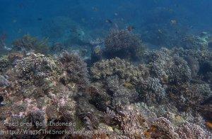 Indo_Bali_492_Banyuning-SE-11a_Coral_20160810_P8100248.jpg