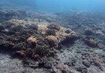 Indo_Bali_510_Banyuning-SE-11c_Coral_20160809_P8090154.jpg