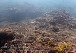 Indo_Bali_529_Aas-12a_Coral_20160809_P8090137.jpg