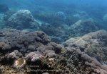 Indo_Bali_544_Aas-12d_Coral_20160809_P8090123.jpg
