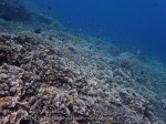 Indo_Bali_545_Aas-12d_Coral_20160809_P8090121.jpg