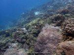 Indo_Bali_568_Aas-12ef_Coral_20160809_P8090093.jpg