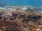 Indo_Lembongan_076_L01b_Corals_20160701_P7010661.jpg