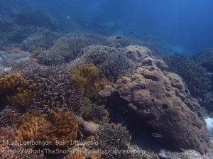 Indo_Lembongan_079_L01c_Corals_20160701_P7010664.jpg
