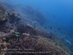 Indo_Lembongan_091_L01cd_Corals_20160629_P6290268.jpg