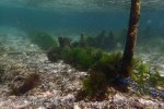 Indo_Lembongan_113_L01cd_Sea-Weed-farming_20160630_P6300346.jpg
