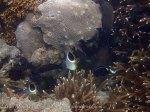 Indo_Lembongan_123_L01e_Corals_20160629_P6290308.jpg