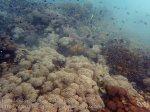 indo_lembongan_132_l01g_softcorals-bicolorchromis-moorishidols-japanesesurgeonfish-blackbackedbutterflyfish_20160629_p6290314