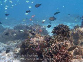 Indo_Lembongan_197_L02-Sth_Corals_20160627_P6270072.jpg
