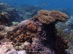 Indo_Lembongan_238_L03_Corals_20160630_P6300432.jpg