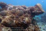 Indo_Lembongan_240_L03_Corals_20160627_P6270109_.jpg