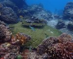 Indo_Lembongan_243_L03_Corals-Six-Barre-Wrasse_20160630_P6300463.jpg