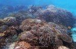 Indo_Lembongan_247_L03_Corals_20160627_P6270111.jpg