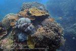 Indo_Lembongan_248_L03_Corals_20160627_P6270118_.jpg