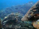 Indo_Lembongan_249_L03_Corals_20160627_P6270120.jpg