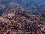 Indo_Lembongan_253_L03_Corals_20160627_P6270150.jpg