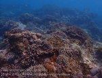 Indo_Lembongan_254_L03_Corals_20160630_P6300568.jpg