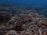 Indo_Lembongan_256_L03_Corals_20160630_P6300572.jpg